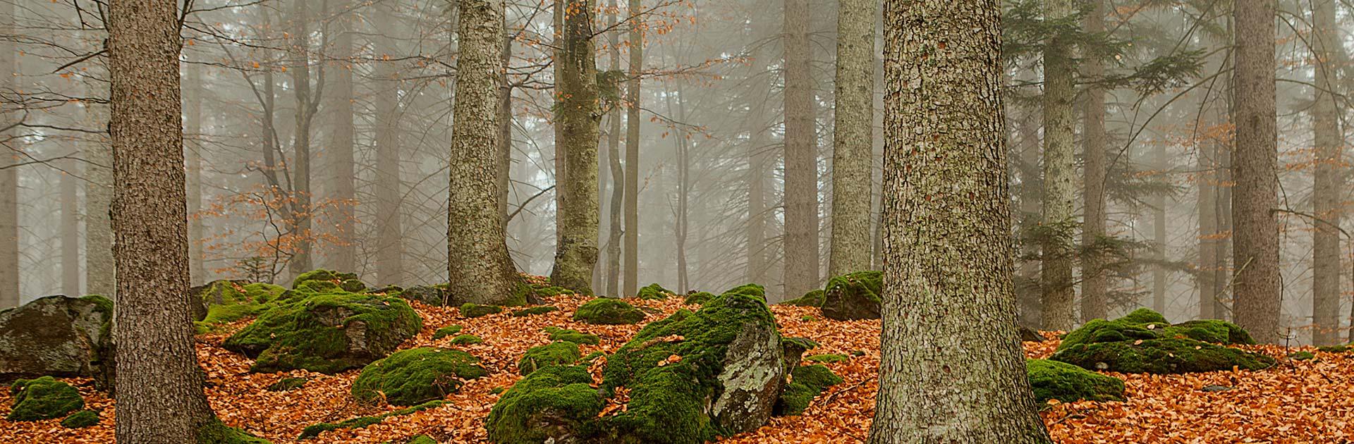 Baumfällung, Baumkontrolle und Kranfällung - Lentner aus Hohenau