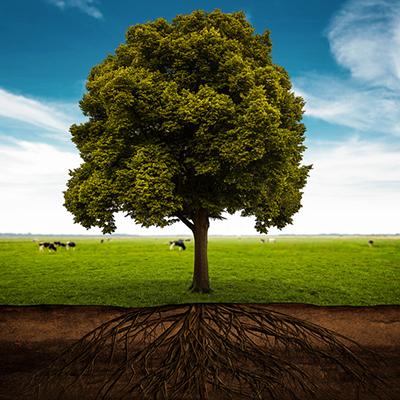 Baum auf Kuhweide
