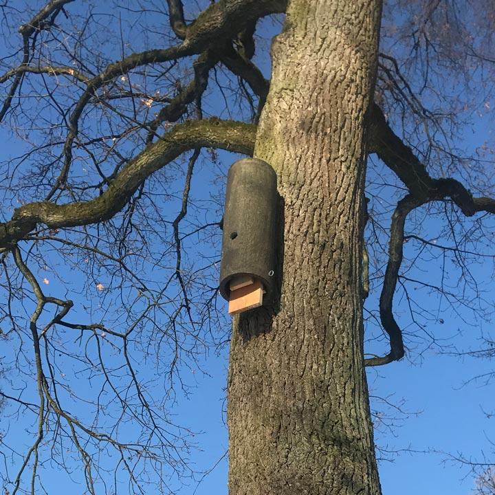 Ersatzquartier für Fledermaus nach Baumverlust