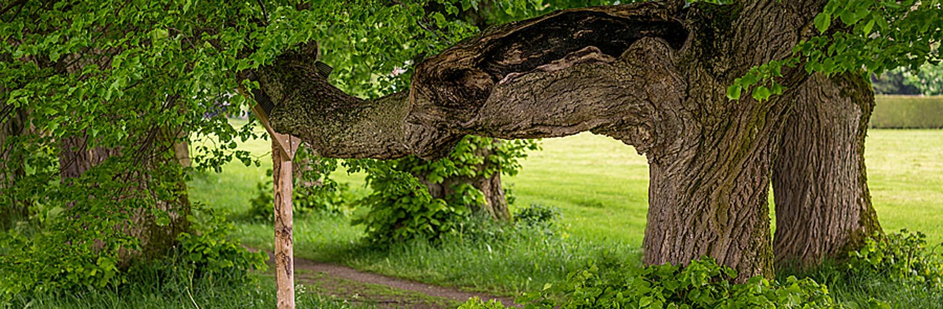Baumfällen, Baumkontrolle, Baumpflege bei Hermann Lentner