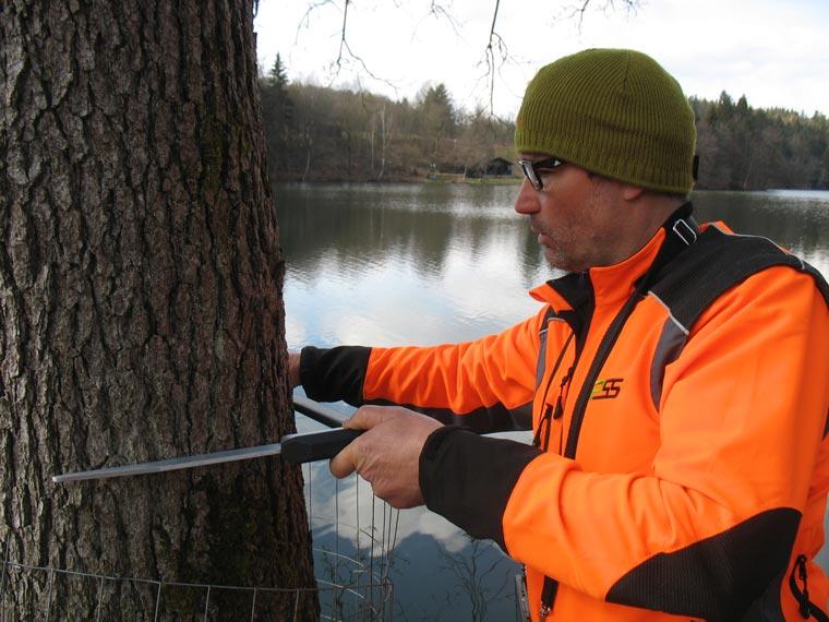 Abmessung von Baumumfang